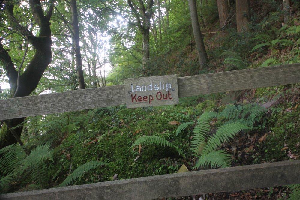 woodland path 4.jpg