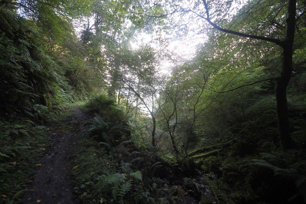 woodland path 5.jpg