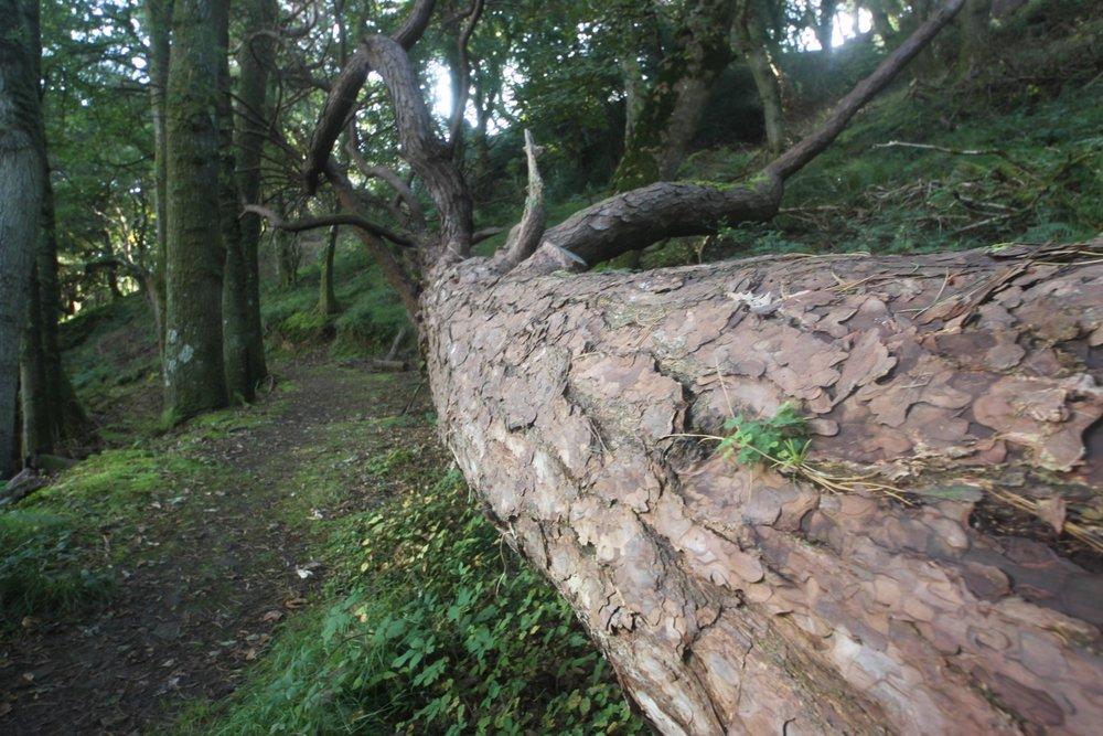 woodland path 6.jpg