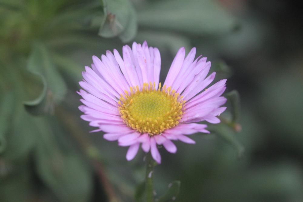 wildflowers 13.jpg