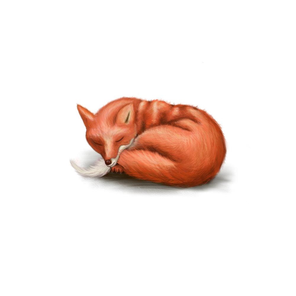 Sleepy Fox.jpg