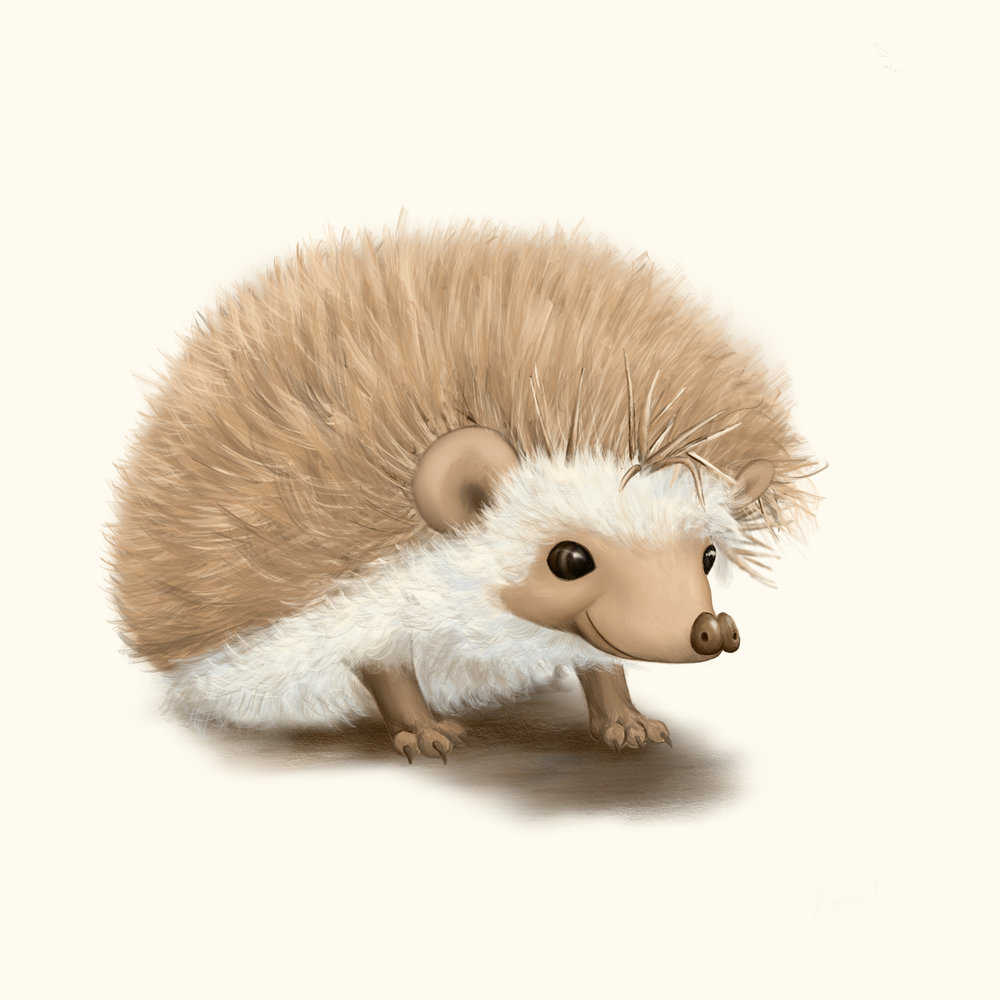 little hedgehog.jpg