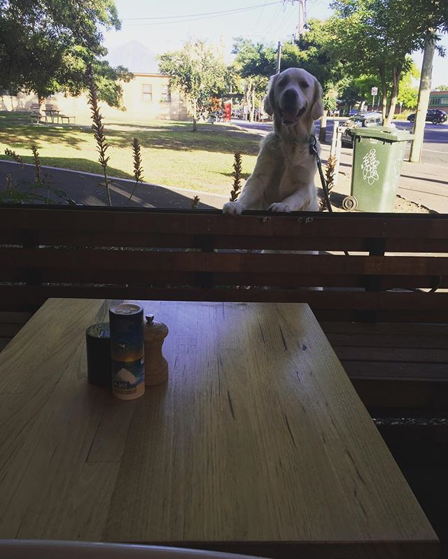 #pippatheretriever not wanting to be left out of the #coffeerun #leroyscafe