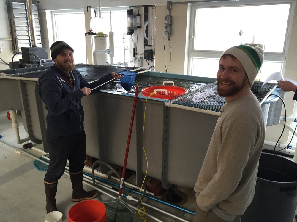 BIOMASS MONITORING - A subsample of trout were taken weekly to determine their feed conversion rates, which is their efficiency for turning feed calories into body weight. Biomass estimates were then used to determine feed rates to maximize growth and minimize wasted food.