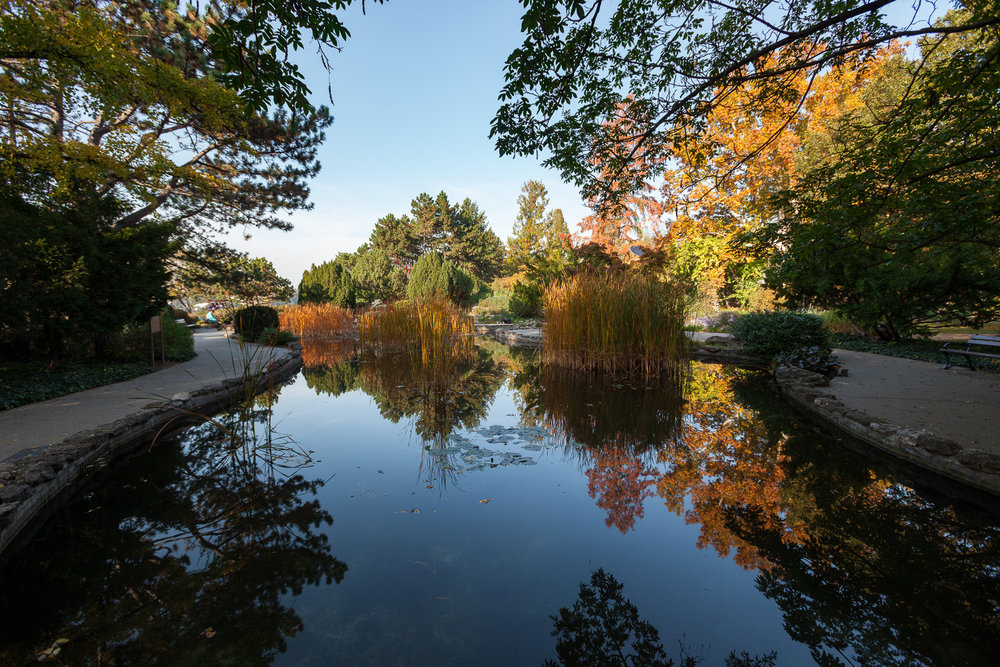 Japanese Garden on Margaret Island