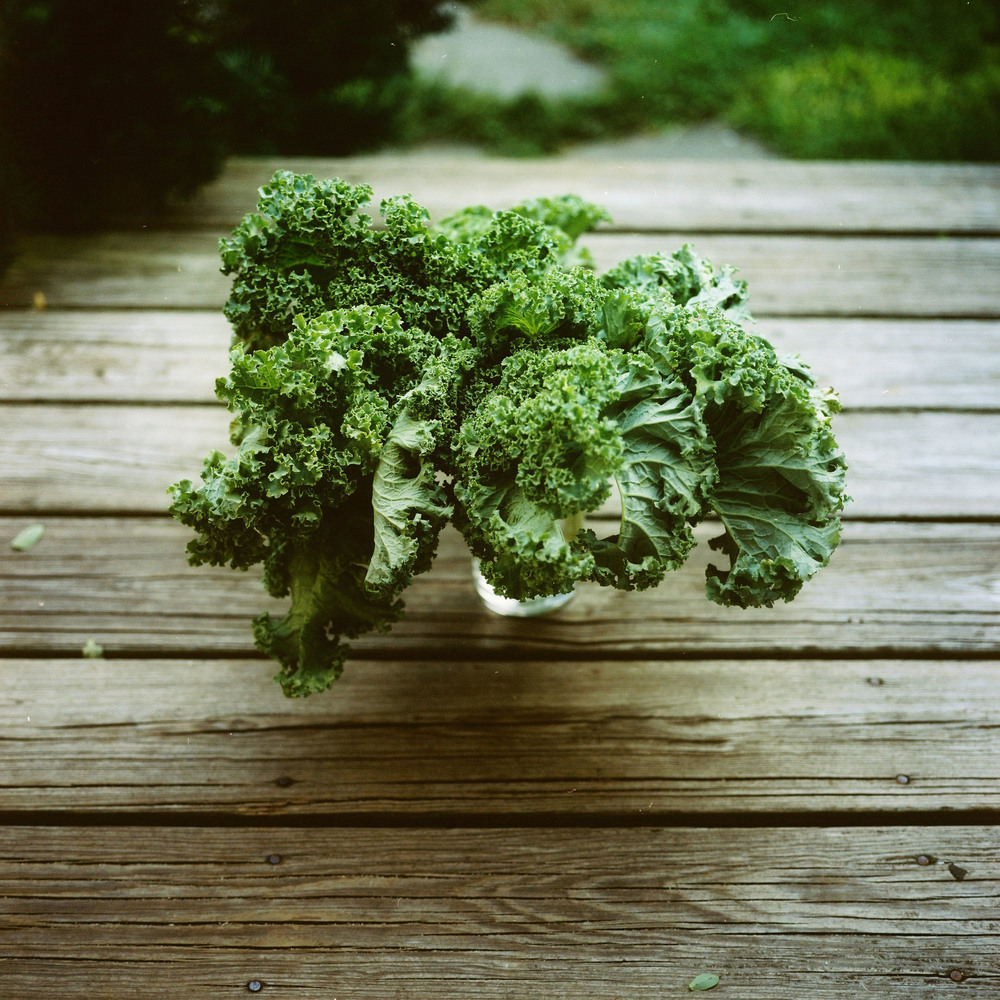 kale from garyC.jpg