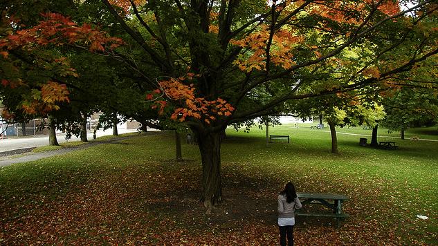 Ramsden-Park.jpg