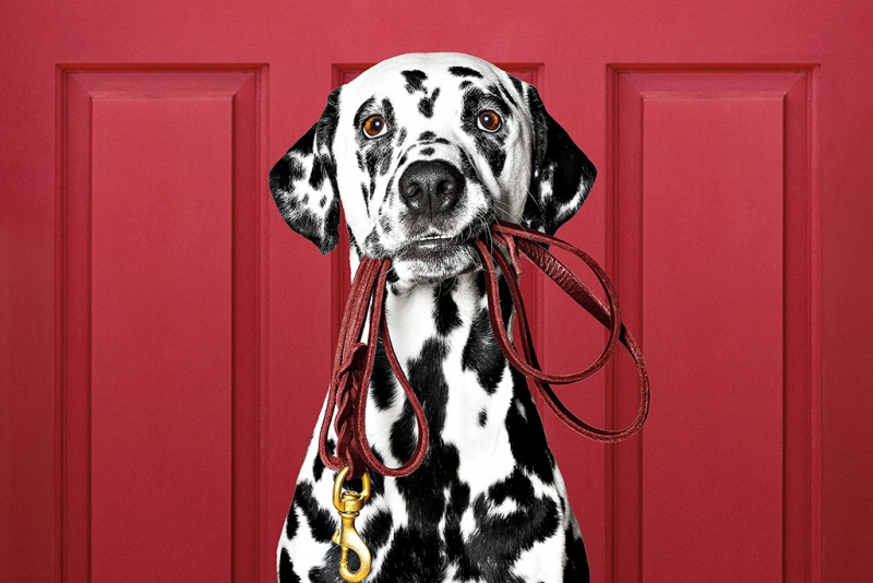 paw and order Cover-Dalmation-5080f9f7.jpeg