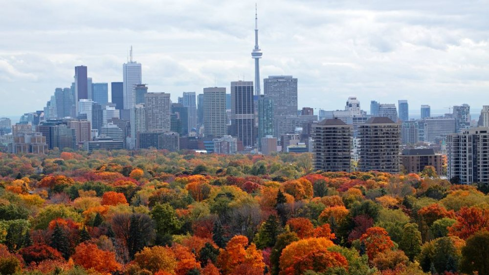 TVO.ORG: Toronto aims to increase its tree canopy cover to 40 per cent. (Orchidpoet/iStock)