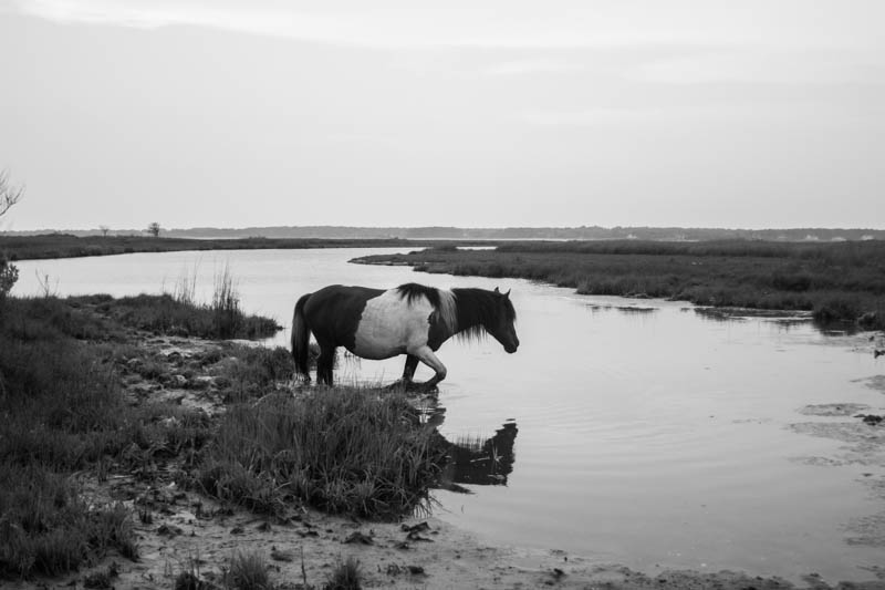 Assateague Island, VA (2012)