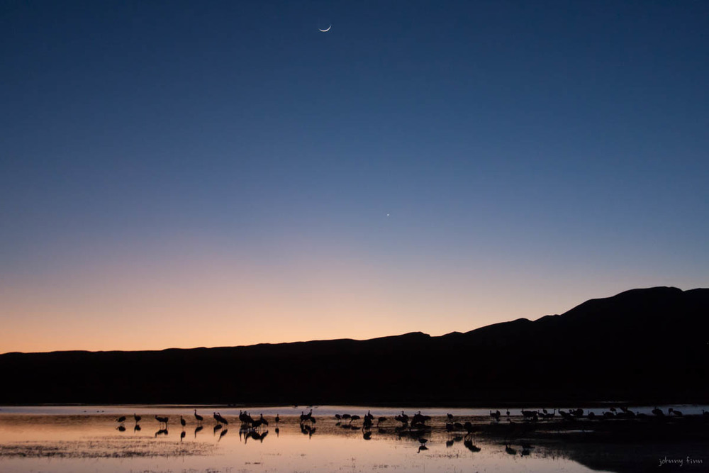 Rocky Mountain Sandhill Cranes under a setting new moon