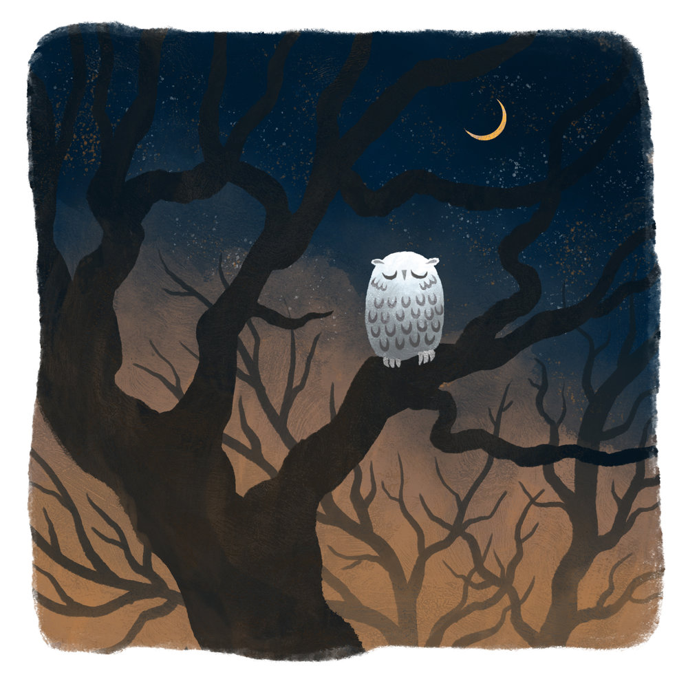 5-owl.jpg