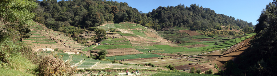 Step farming in San Isidro, Guatemala, near Ana Teresa's home.