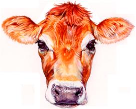 ithaca_milk