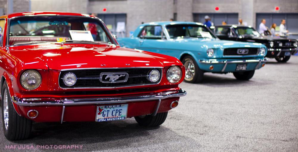 Vintage Ford Mustangs.jpg