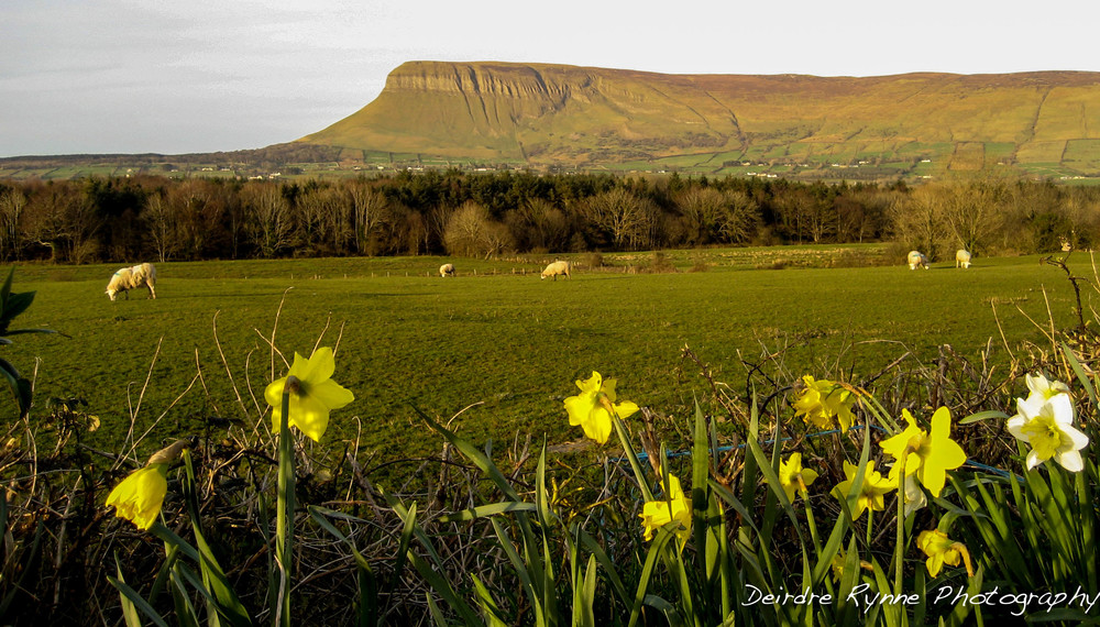 Benbulbin, Co. Sligo, Ireland. March 2009