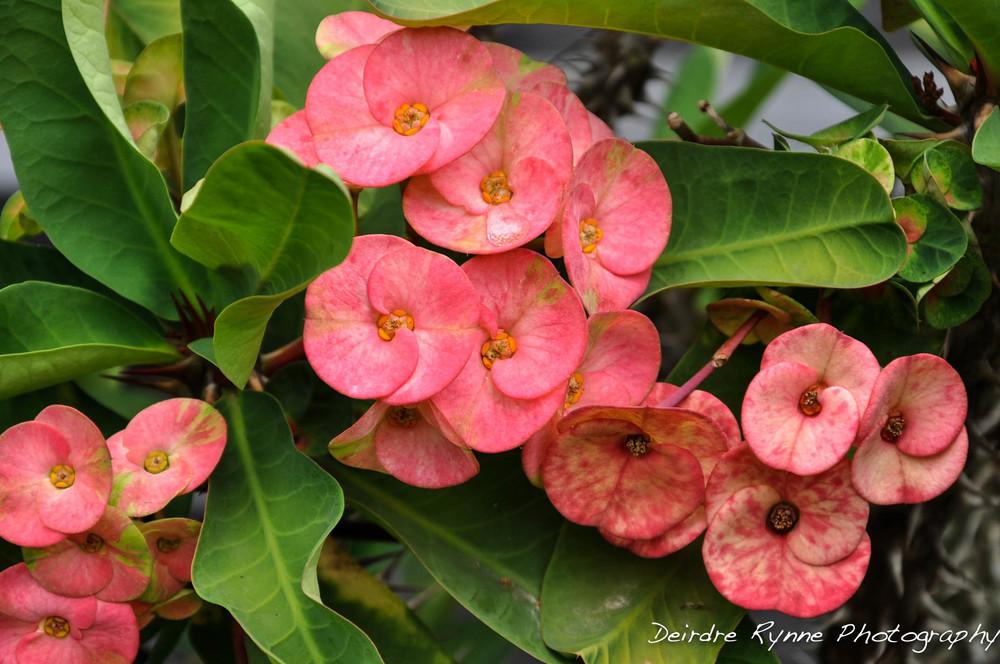 Huế, Vietnam Flowers