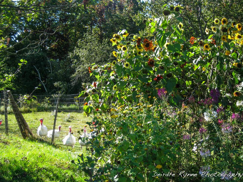 Brian's Farm