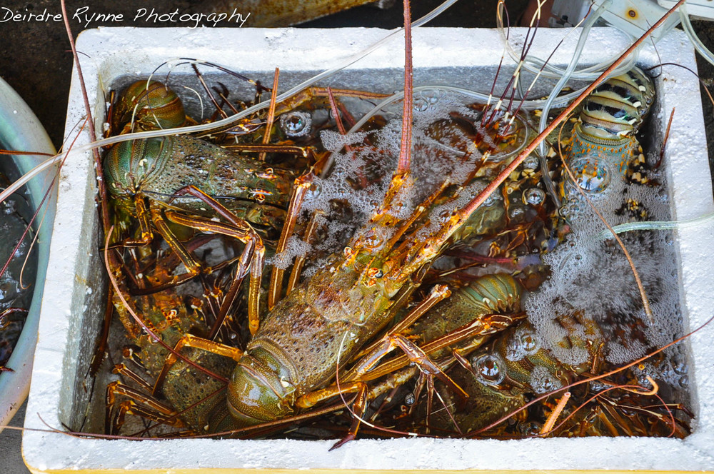 Cham Island Lobsters, Vietnam. August 2012