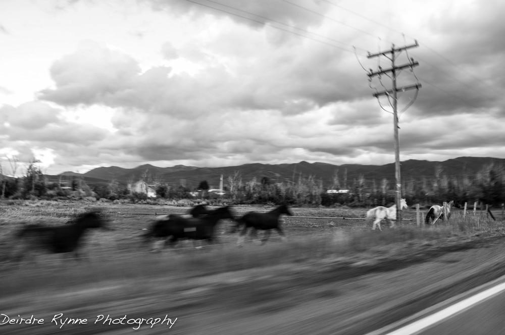 Wilson Horses