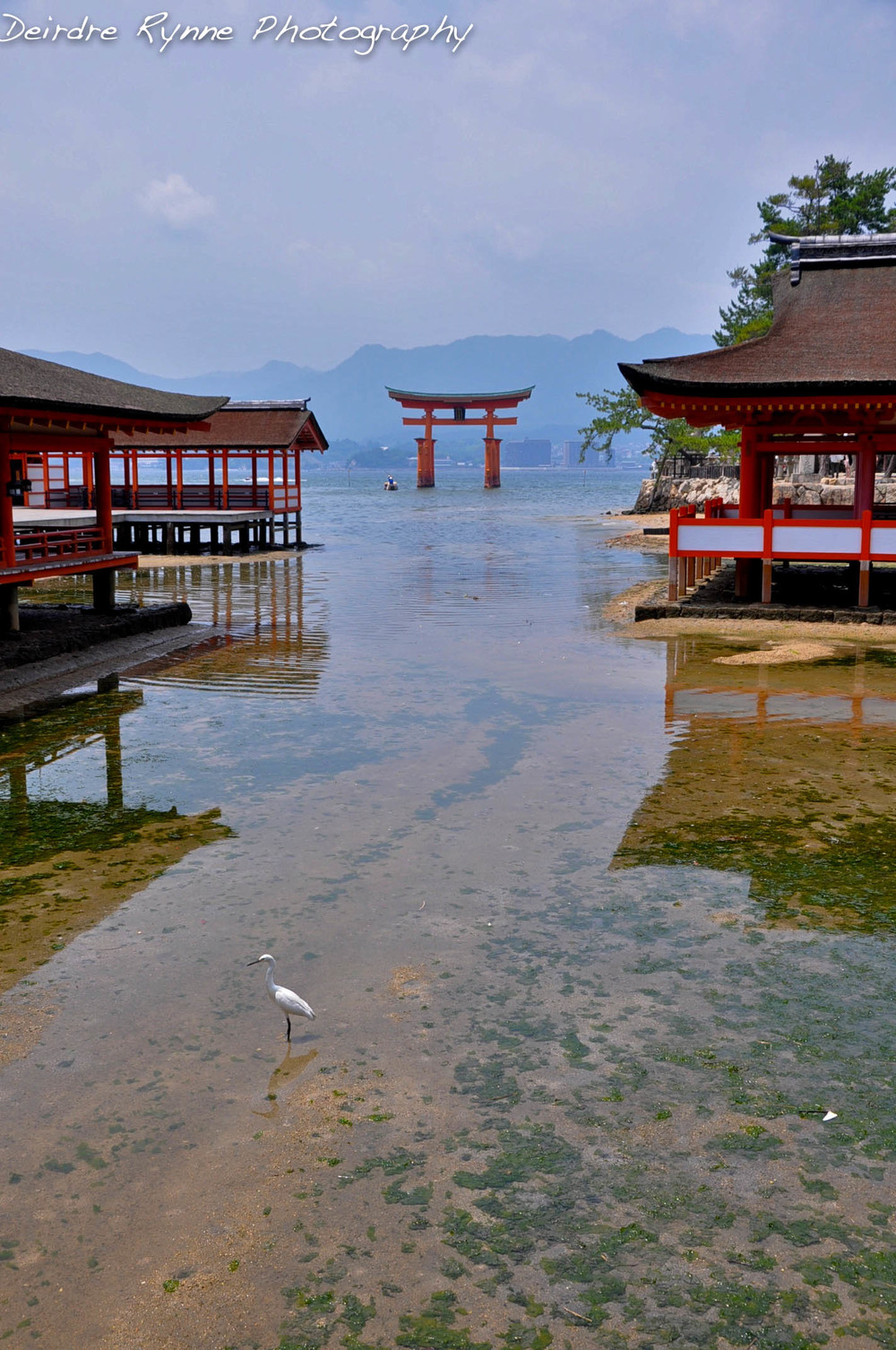 Itsukushima Shrine & Crane