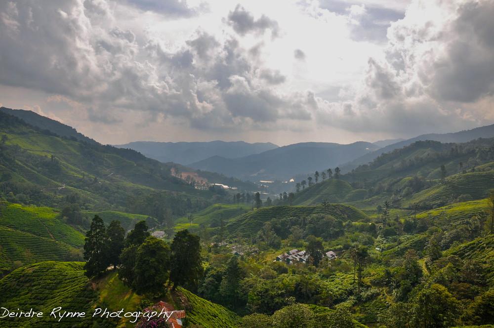 Heaven/Boh Tea Plantation, Tanah Rata, Malaysia. August 2012.