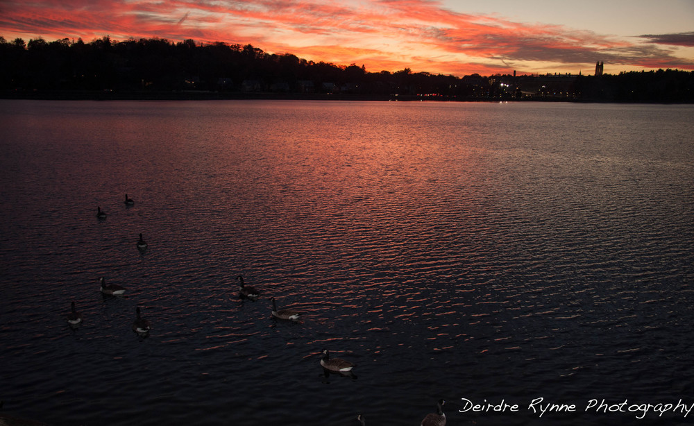 BC SUNSET 11.6  pink water  pan BC ducks W.jpg