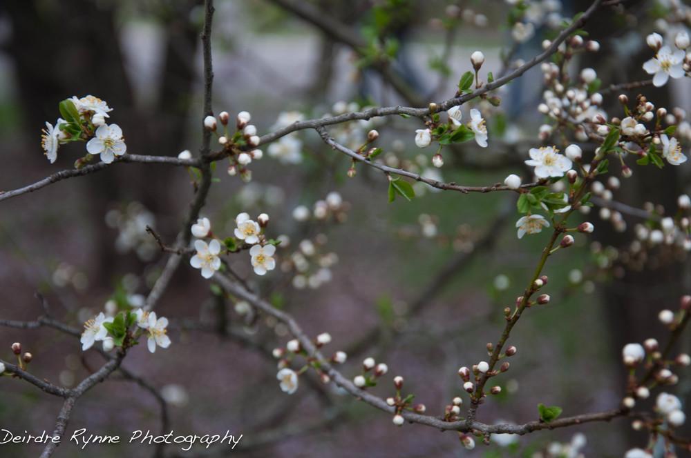 spring 2014 2 w.jpg
