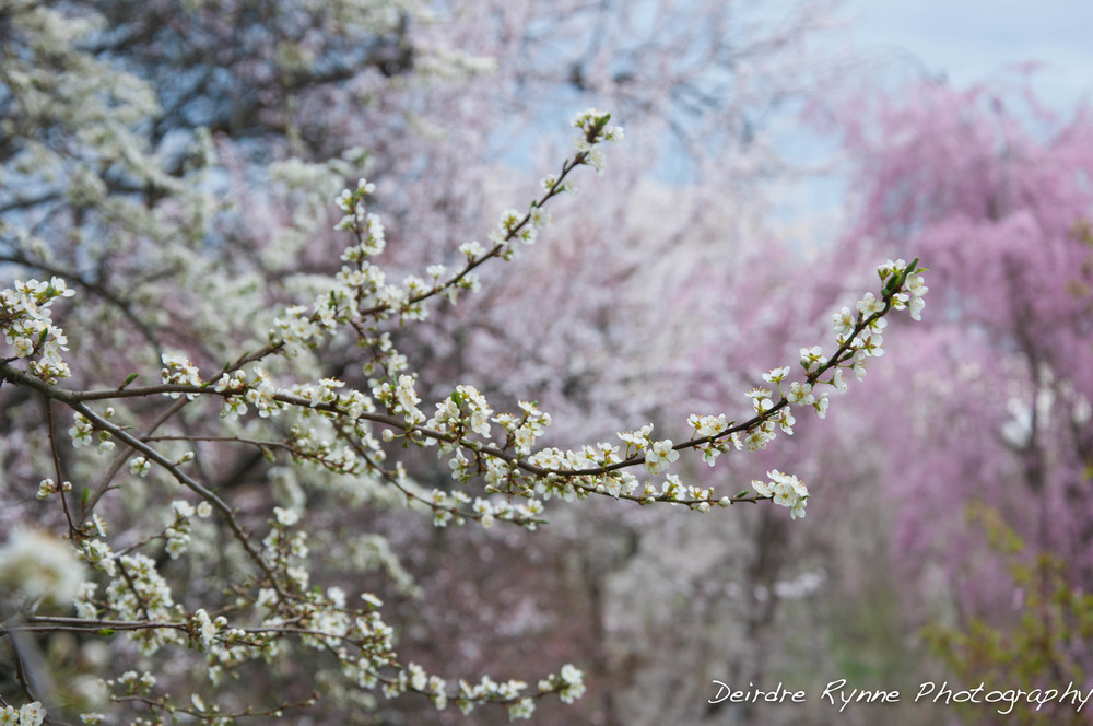 spring 2014 1 w.jpg