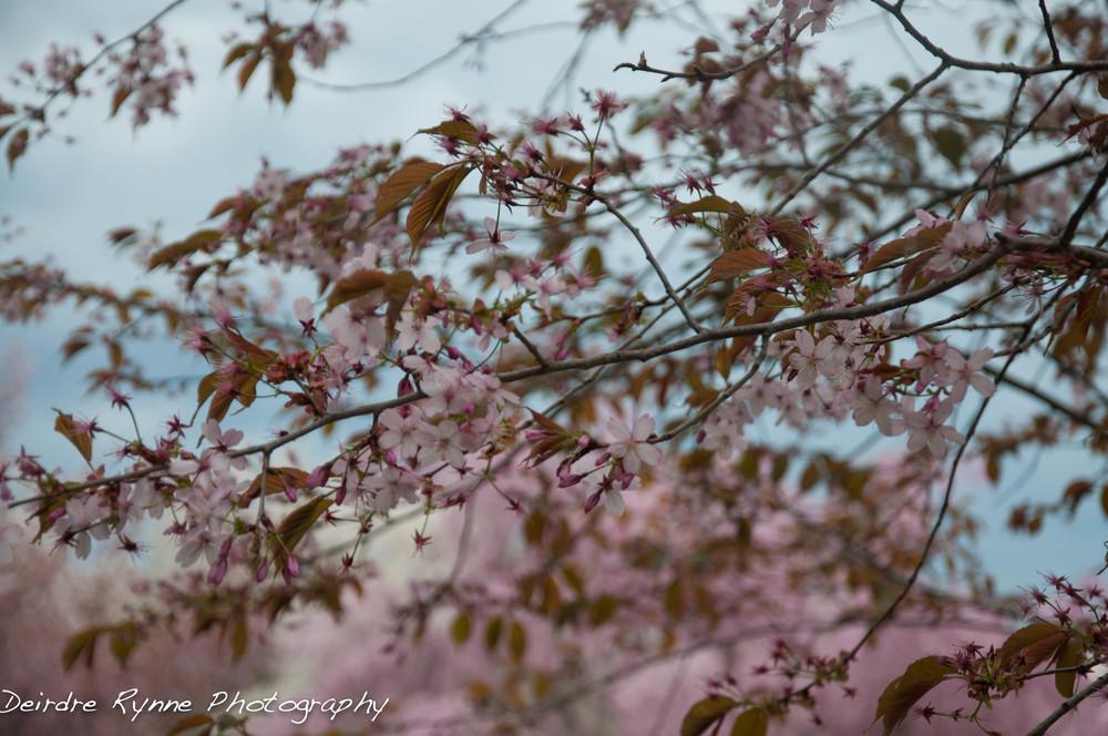 spring 2014 3 w.jpg