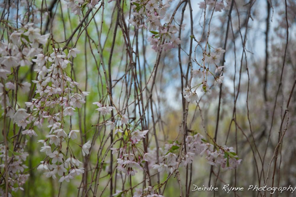 spring 2014 5 w.jpg