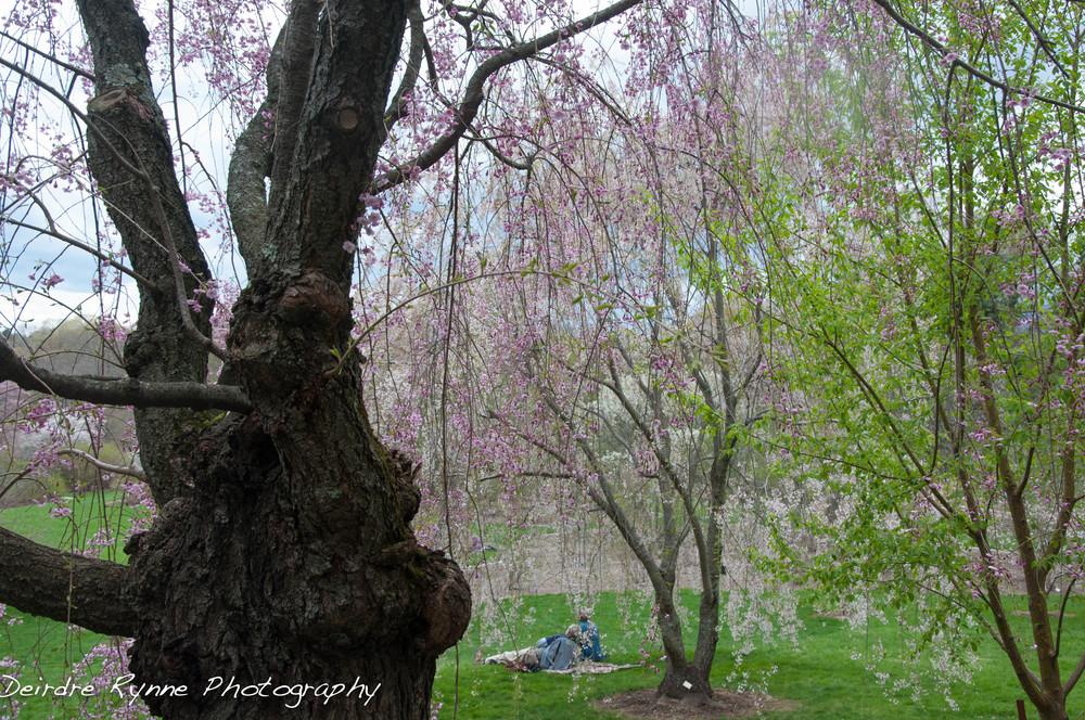 spring 2014 4 w.jpg