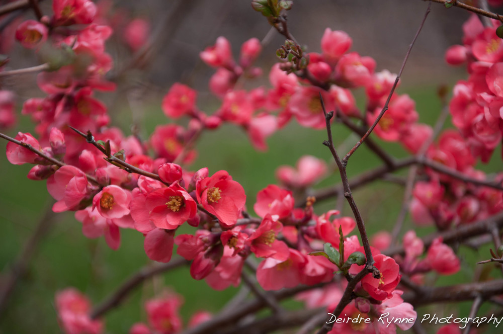 spring 2014 11 w.jpg