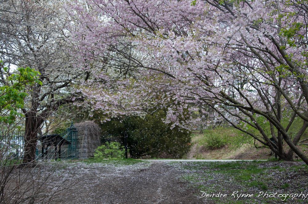 spring 2014 9 w.jpg