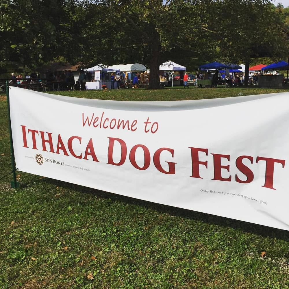 Find us today at the #ithacadogfest2015 beautiful day to celebrate our best friends ❤️🐩 at Cass park Ithaca (at Cass Park Rink, Pool, & Fields)