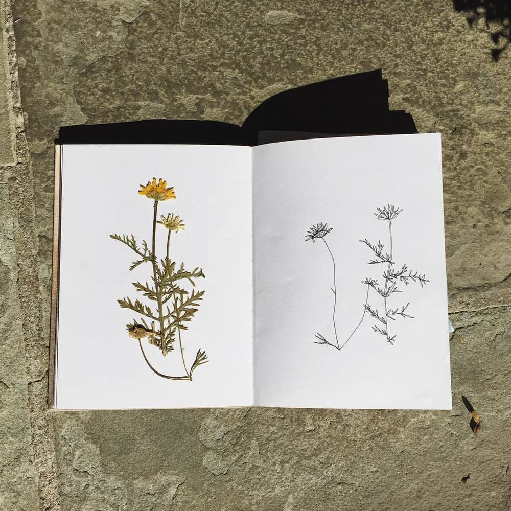From the #sketchbook #botanical #illustration #POsketchbook