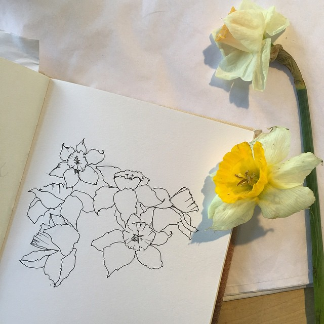 At the @ithacafarmersmarket drawing #daffodils what a fabulous day! 🌼 🌼🌼#planetariumdesign #illustrating #sketchbook (at Ithaca Farmers Market)