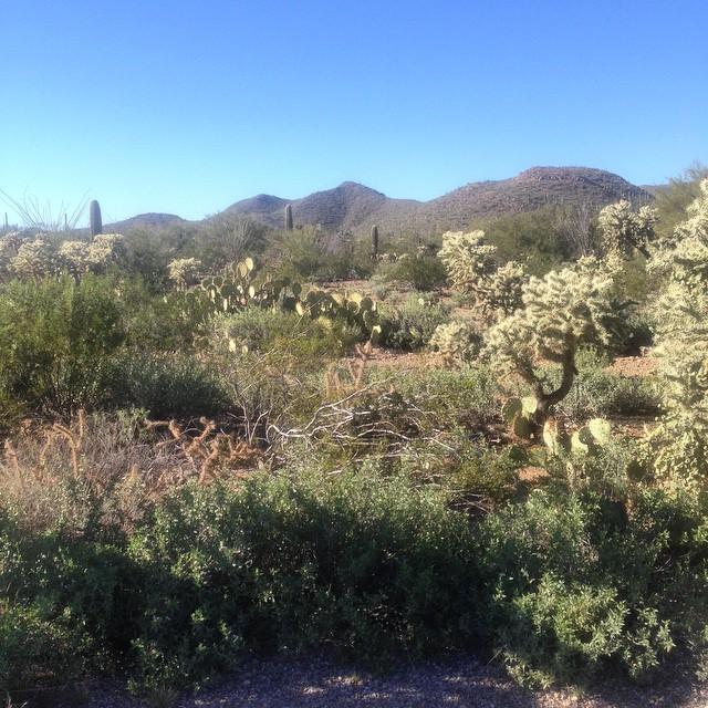 OMG #ARIZONA I think I 💚 you! #roadtrip2015 #roadtrippingUSA (at Tucson Mountain Park)
