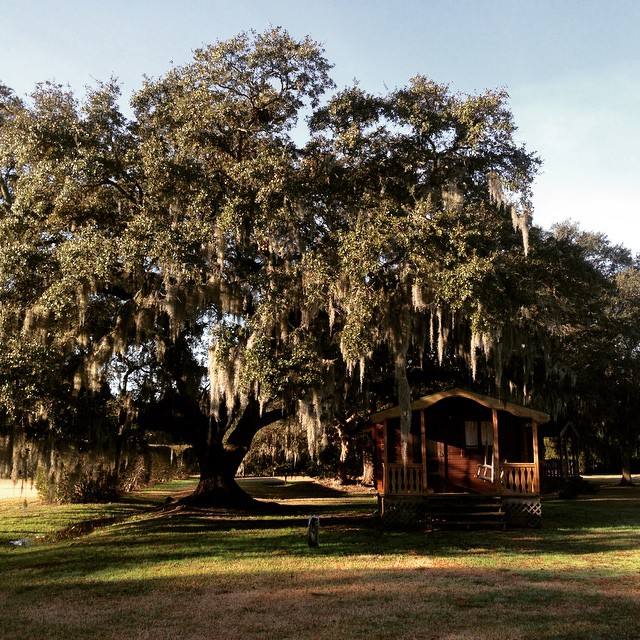 Some places are just *magical *fell in love with southern (Spanish) moss #thesouth #wherethesunshines #roadtrip2015