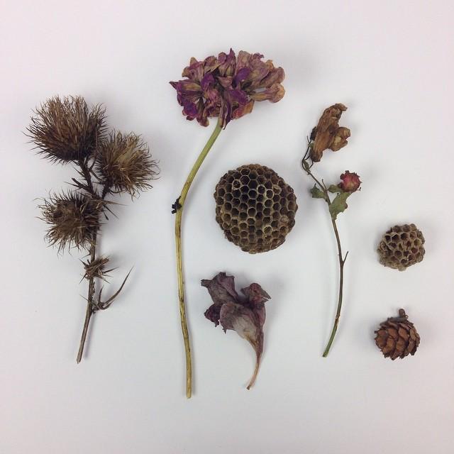 Love collecting bits of nature #planetariumdesignstudio