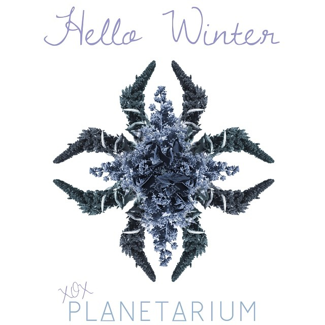 Hello #winter our new newsletter is out :) #planetariumdesign
