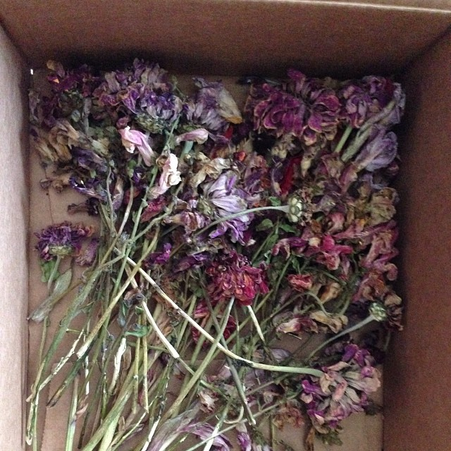 Best package ever to received by mail! #love / #botanical / #dryflowers / #pinks&purples