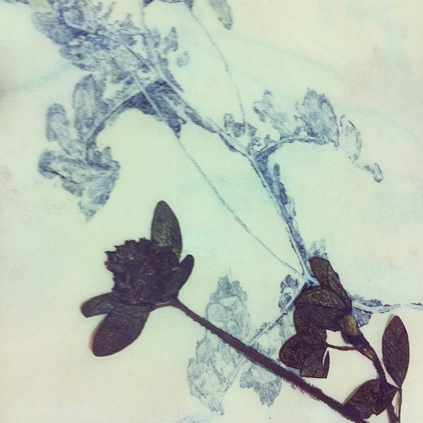 #dry #flower + #blue #ink