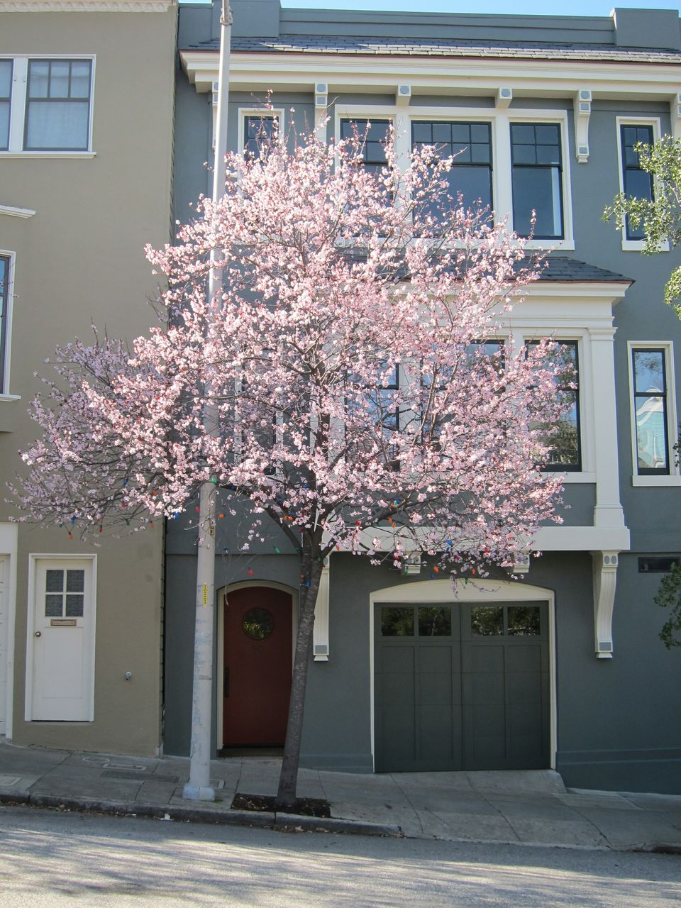 Purple leaf plum, 59 Woodland Avenue