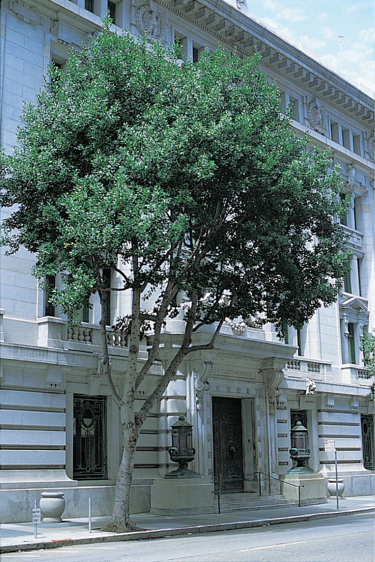 New Page San Francisco Trees