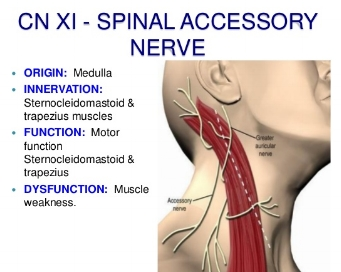 cranial-nerve-assessmentsimple-and-easy-to-perform-for-medics-and-physiotherapist-38-638.jpg