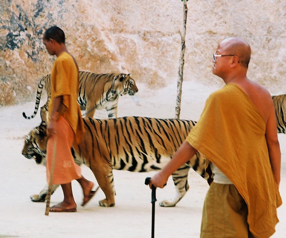 Kanchanaburi_tiger_monks.jpg