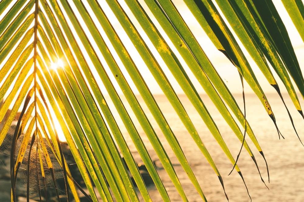 RP-spiderweb-palms.jpg