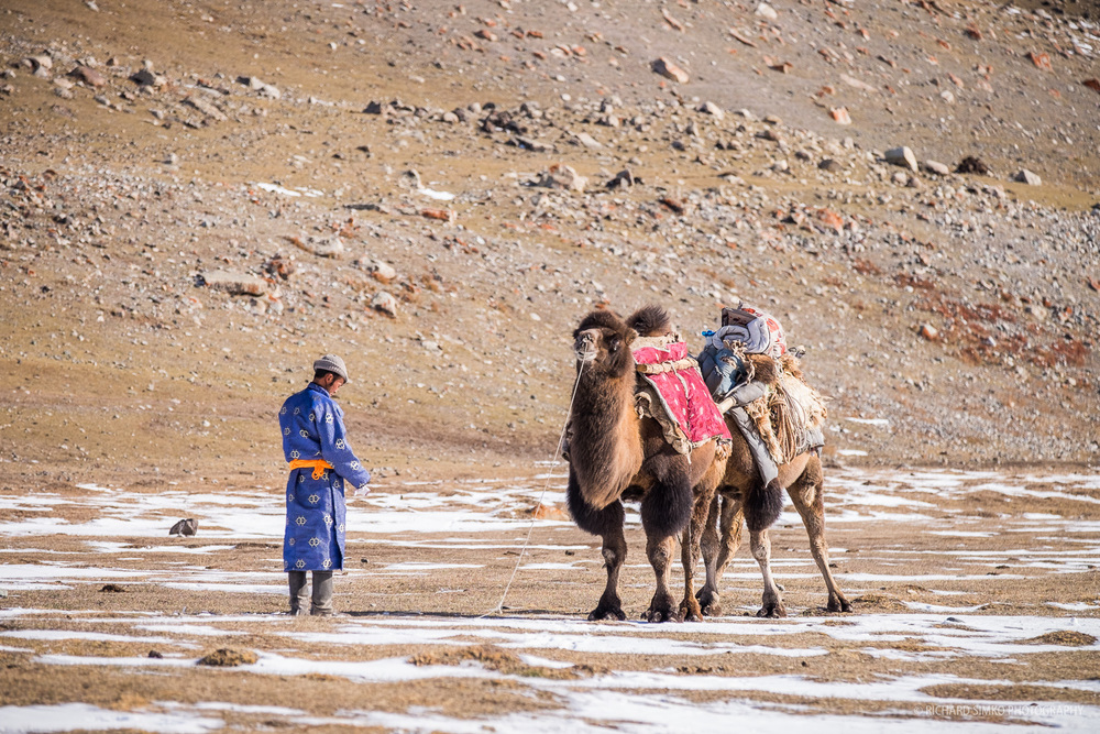 Our trucks for next leg of expedition. Camels are widely used for carrying cargo. They are strong, though and not demanding. Just like yak's in Nepal.