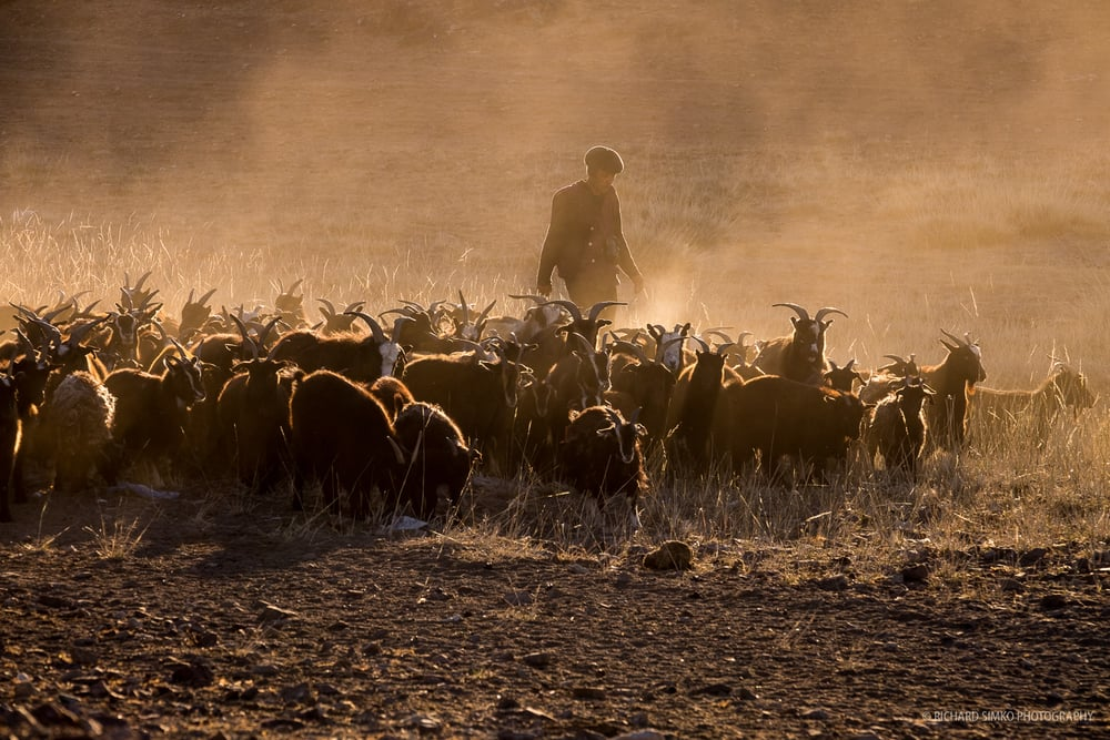This is the photograph when everything came together. Right place at the right time, good subject, early morning light that plays well with the dust cloud created by herd of goat. I took several shots but when the herder emerged from dust I felt it is going to be the best version of the scene. It has more value as documentary photograph when we see the full picture.